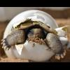 TurtleEgg